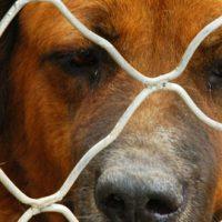 Casas de acogida para perros