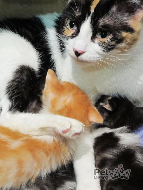 Por que los gatos amasan