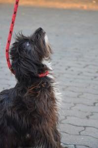 Preguntas antes de adoptar un perro