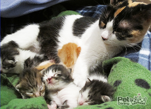 Casas de acogida para gatos