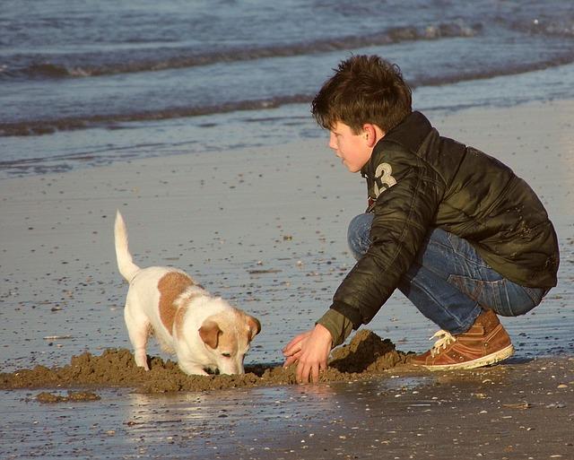 Acogida de perros