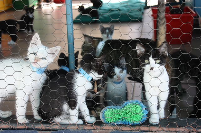 Casas de acogida gatos