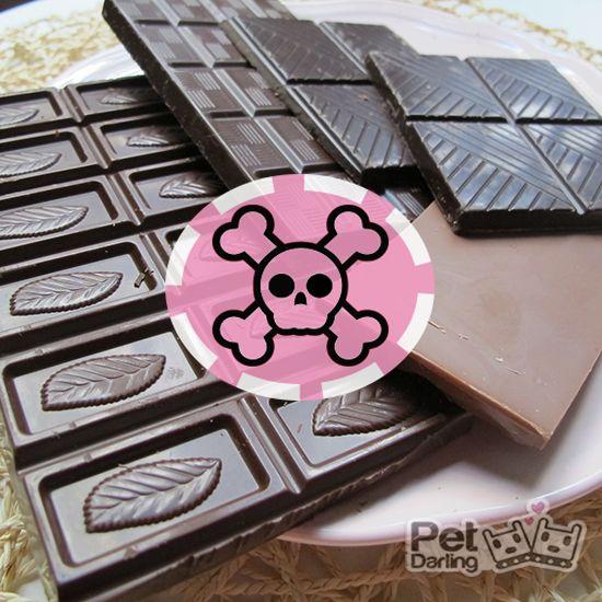 mi perro ha comido chocolate que hago
