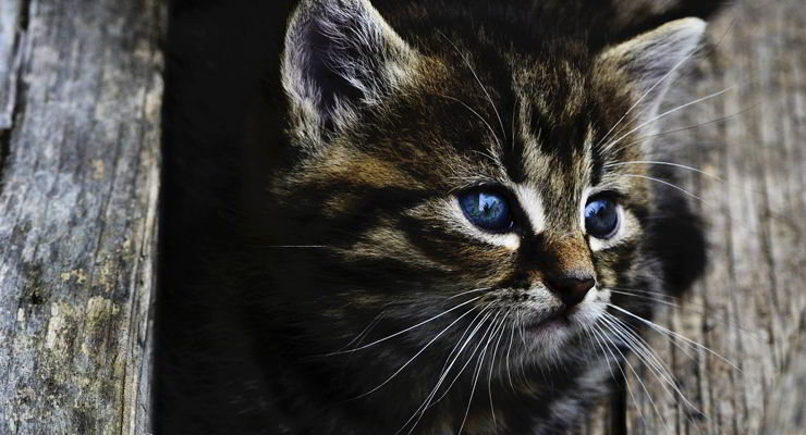 esterilizacion de gatos