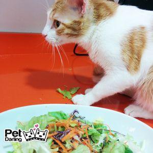 Gatos vegetarianos, un gato puede ser vegetariano?