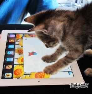 Gatito jugando un juego de i-pad para gatos