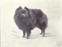 pomerania perro caracteristicas