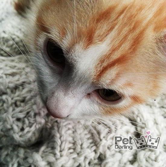 mi gato amasa mantas