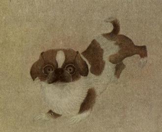 Perro-pug-caracteristicas