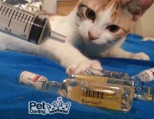 calendario de vacunas del gato