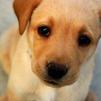 ansiedad por separación perros