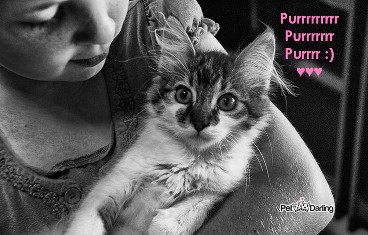 como demuestran amor los gatos