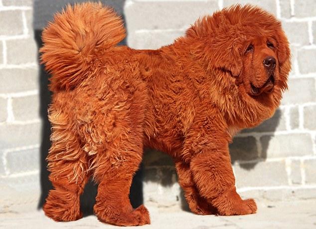 El perro mas caro del mundo 2014
