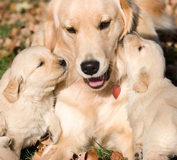 cuando separar a un cachorro de su madre