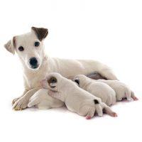 cuando se separan los cachorros de su madre