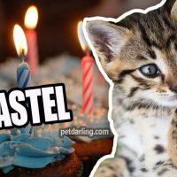 pastel para gatos
