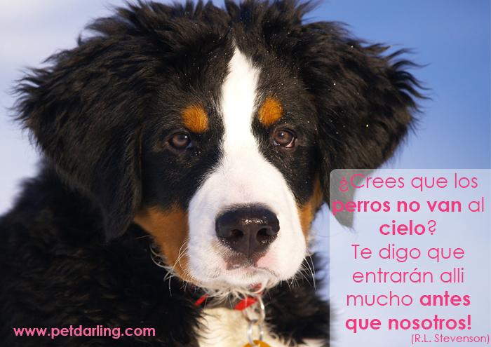 frases celebres sobre perros