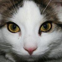 beneficios de castrar a un gato