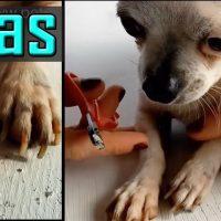 como cortarle las uñas a un perro