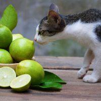 verduras y frutas que no pueden comer los gatos