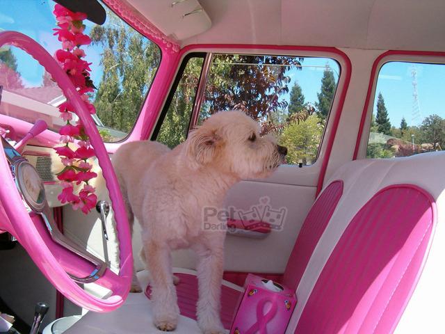 que pasa si dejo perro en el coche en verano