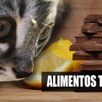 alimentos toxicos para gatos