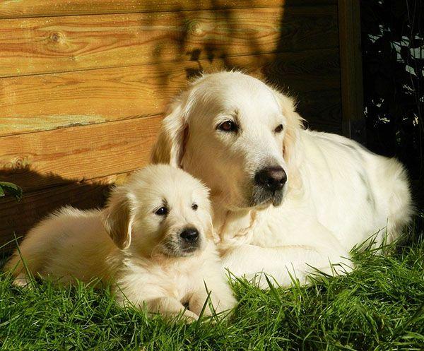 cachorro su madre
