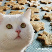 galletas para gatos