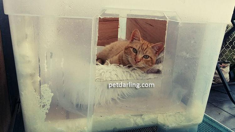hacer casa para gatos invierno