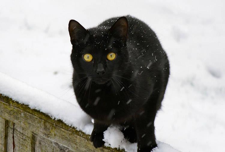 hacer casa de invierno para gatos