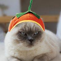 cuidados-para-gatos-halloween