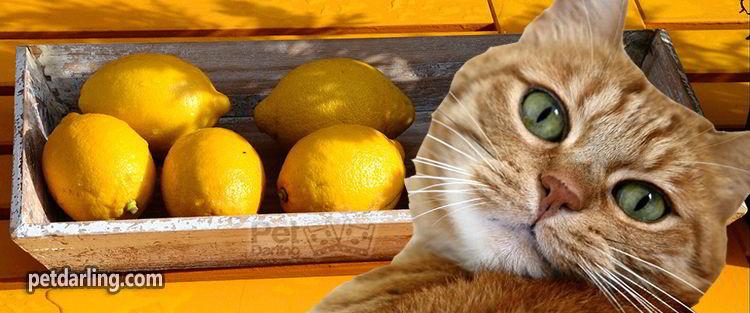 como eliminar el olor a pis de gato