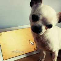 juegos de ipad para perros gratis