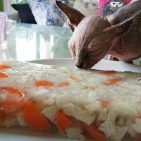 receta gelatina para gatos natural DIY pavo