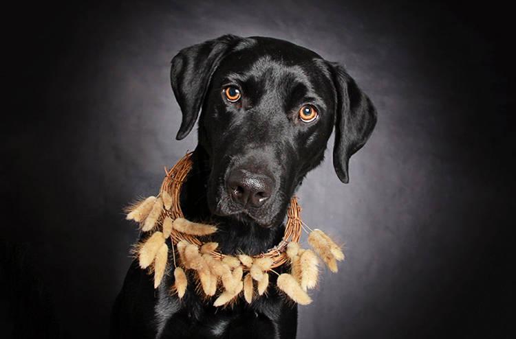perros negros fotos artisticas profesionales fotografias