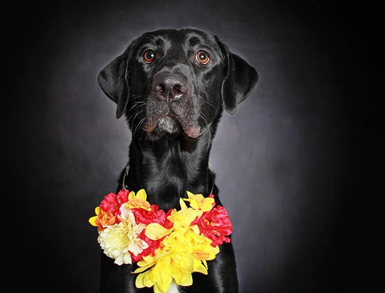 fotografias perros negros encontrar hogar