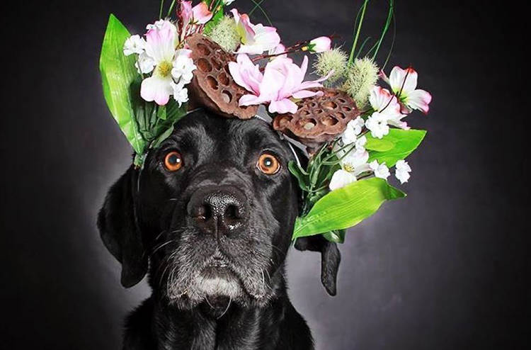 fotos perros negros en adopcion