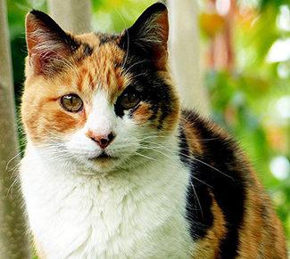 nombres para gatas tricolor