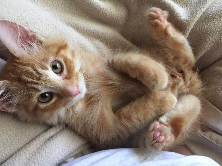 nombres de gatas