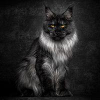 nombres para gatos negros