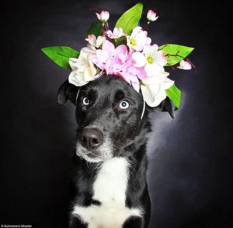 fotos perros negros adopcion