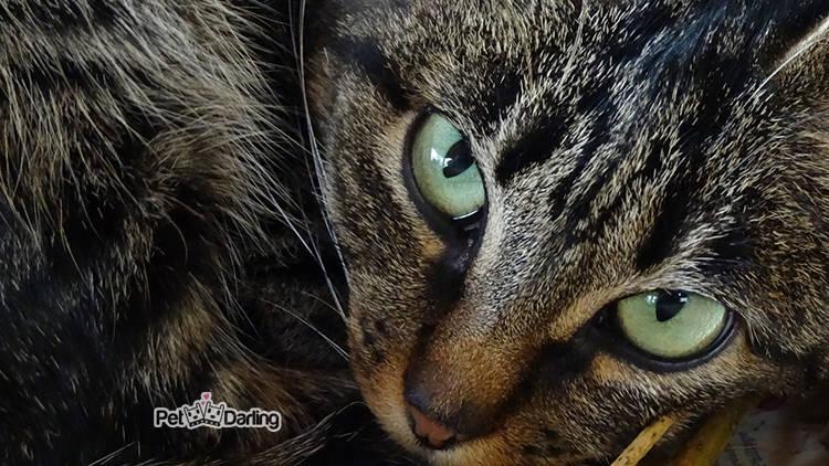 Tratamiento de oxiuros en gatos