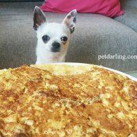 comida casera para perros tortilla receta