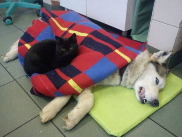 gato enfermero cuida animales enfermos 2