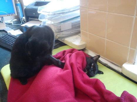 gato cuida animales enfermos hospital veterinario