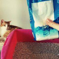 eliminar olor arenero gato