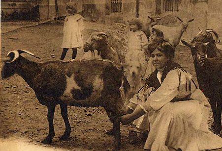 foto perro de agua español antiguo