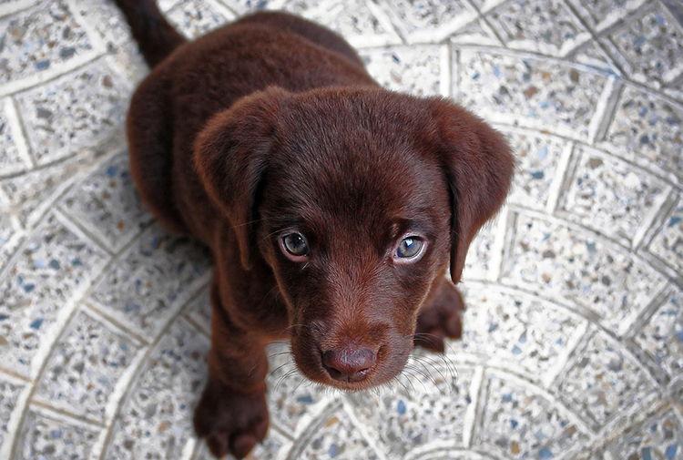 como enseñar cachorro a hacer sus necesidades fuera