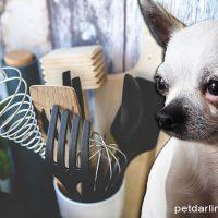 evitar salmonella carne cruda perros
