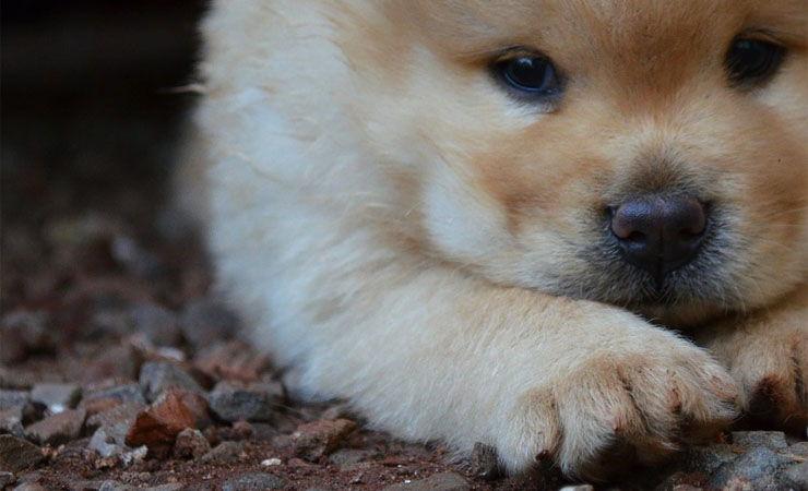nombres japoneses para perro macho